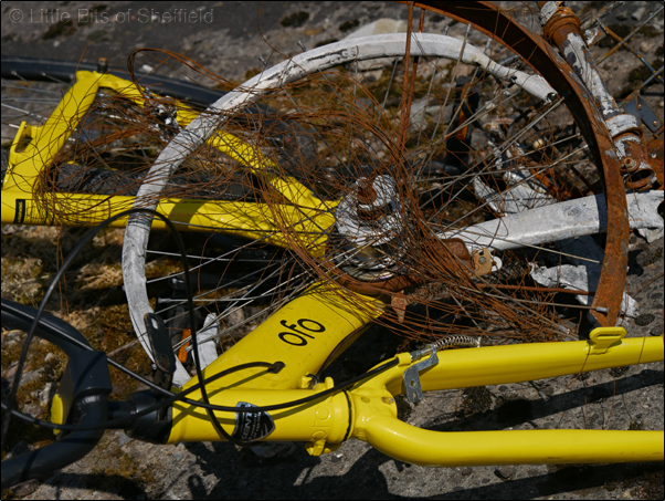 5. OFO Bicycles | Share or Shame | © Little Bits of Sheffield 2018 | SP1050443E